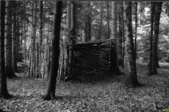 Waldhütte 1996